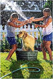 Tvätta hund